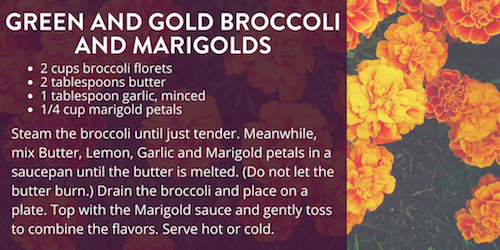 Green and Gold Broccoli and Marigolds Recipe