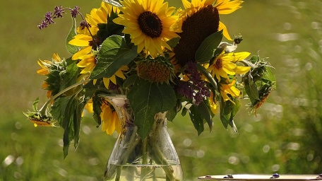 sunflower summer seasonal flowers