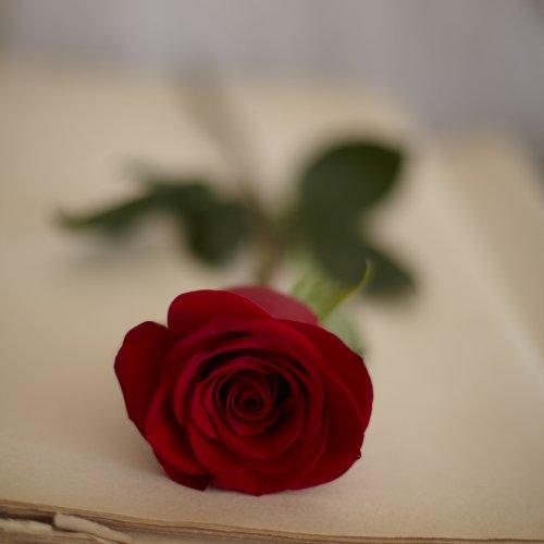 most romantic flower
