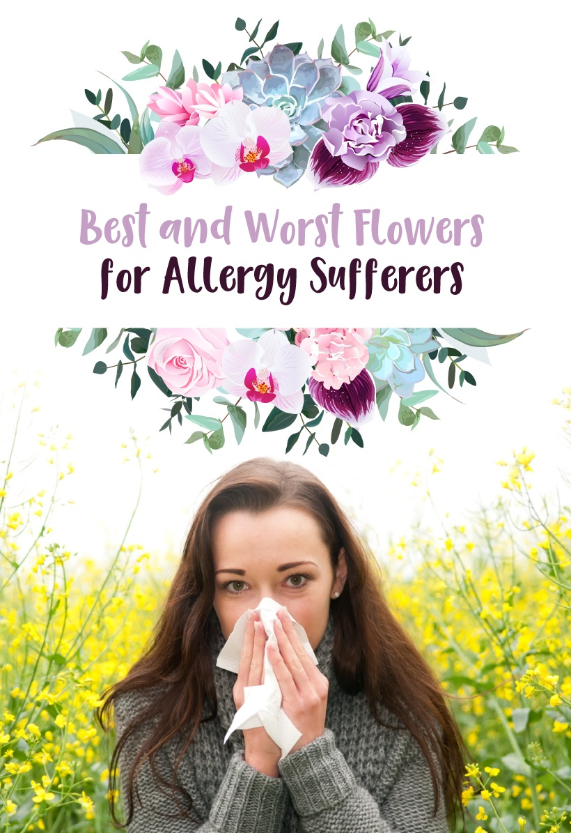 flowers for allergy sufferers