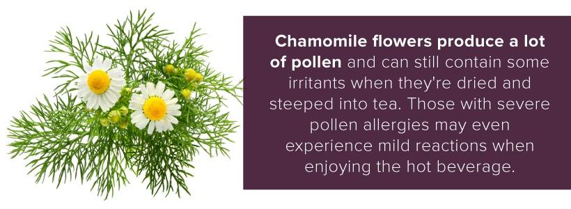 chamomile flower pollen