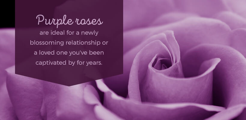 send purple roses