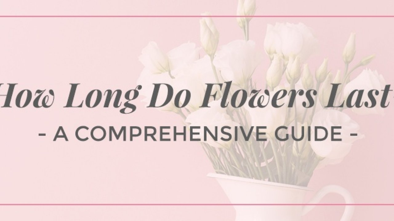 How Long Do Flowers Last Comprehensive Guide Ode A La Rose