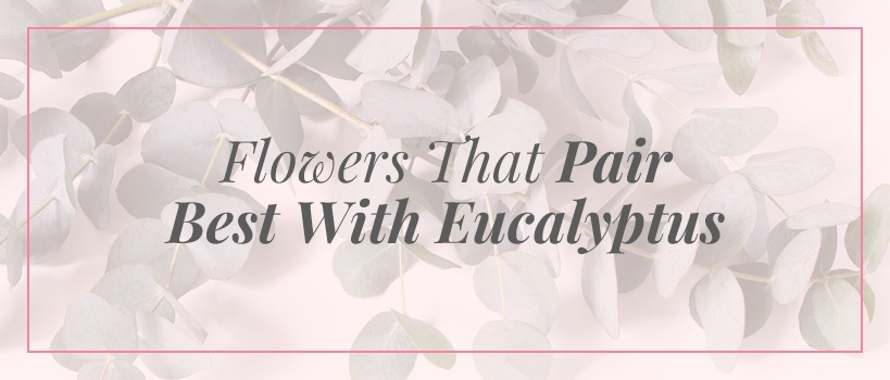 flowers that pair best with eucalyptus