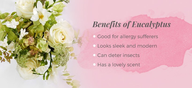 benefits of eucalyptus