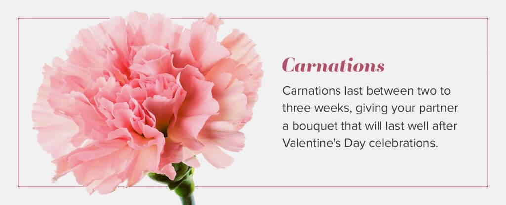 valentines carnations