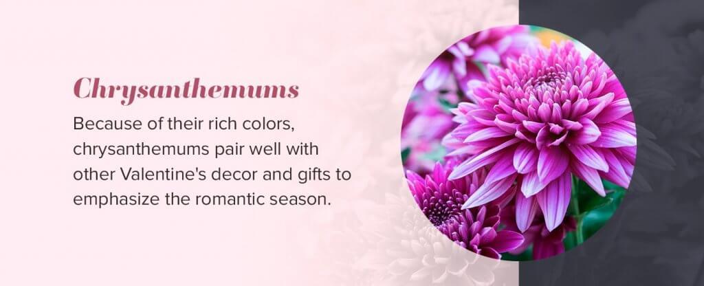 valentines chrysanthemums