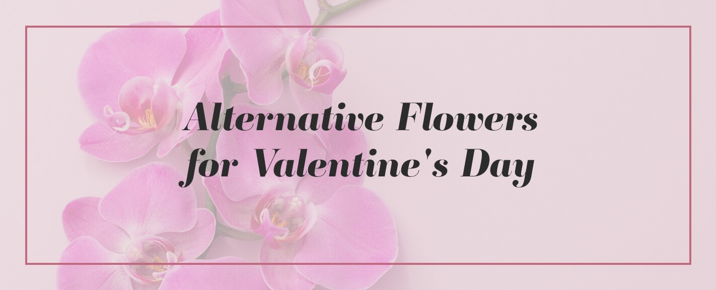 alternatives to roses
